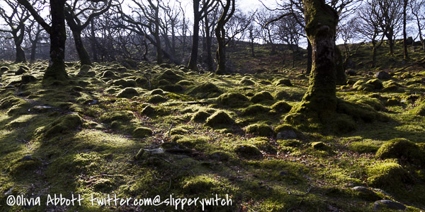Mossy lumps!